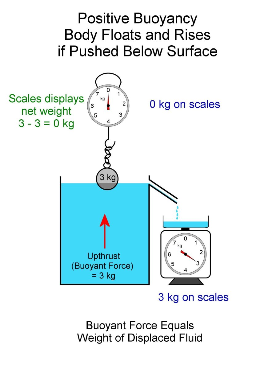 Positive buoyancy. The buoyant force and weight of the hollow steel ball are equal.