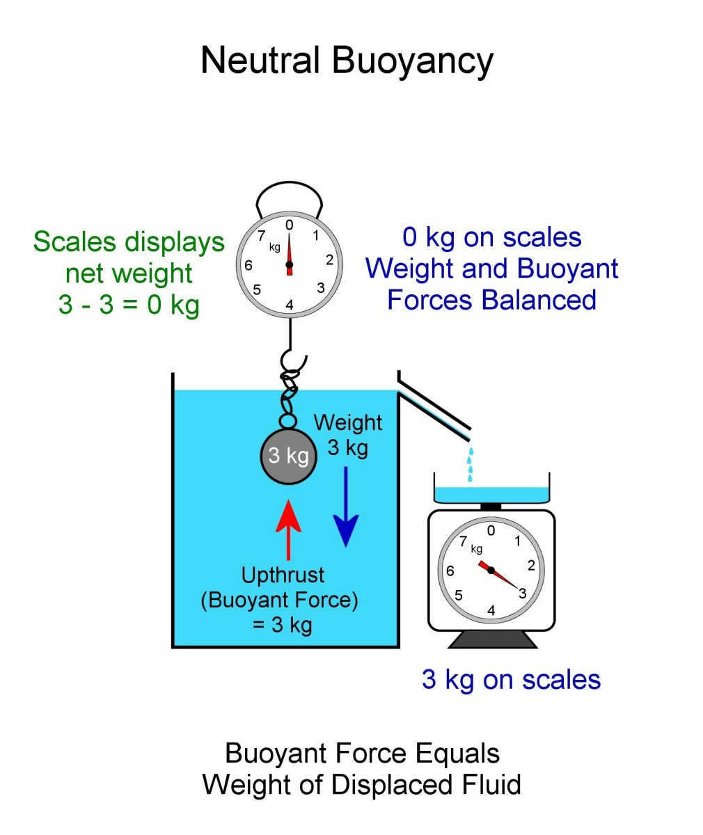 Neutral Buoyancy. Body can be positioned anywhere under the surface. Buoyancy force and weight of ball are equal.