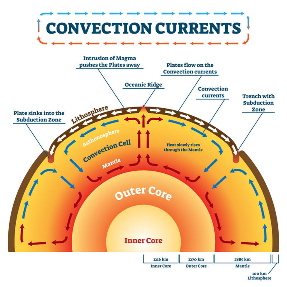 Convection currents in the mantle cause the motion of the lithosphere's plates.