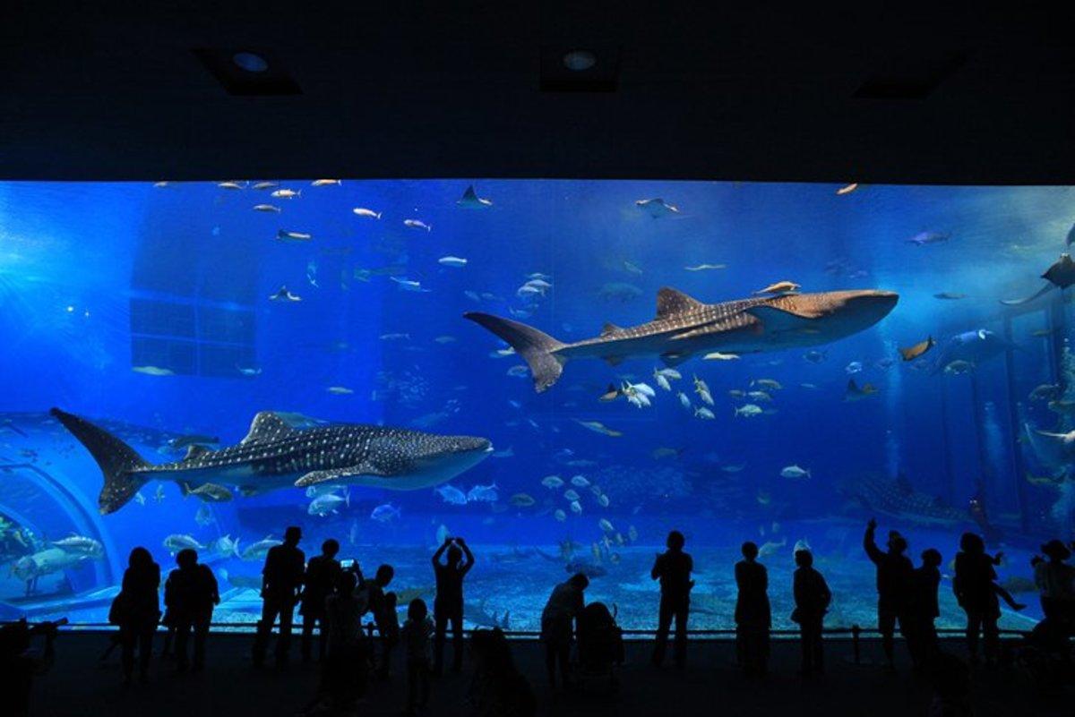 Georgia Aquarium: The world's largest aquarium, Georgia Aquarium houses more than 100,000 aquatic animals in more than 10 million gallons of fresh and saltwater