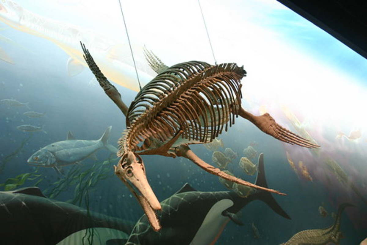 An ichthyosaurus on display at the Smithsonian.