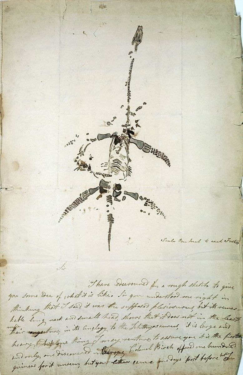 Mary Anning's drawing of a plesiosaurus.