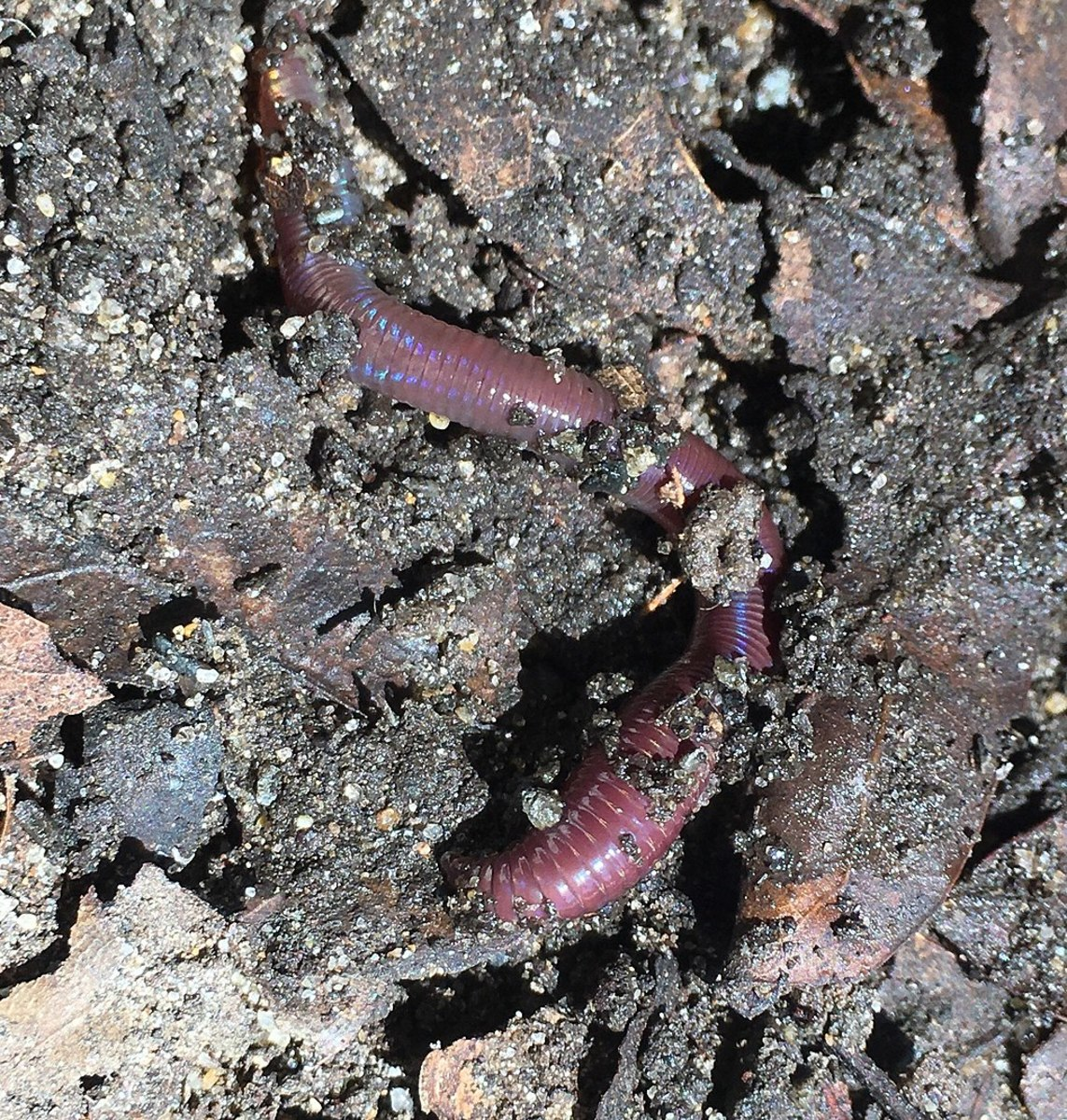 Soil is an example of a microecosystem.
