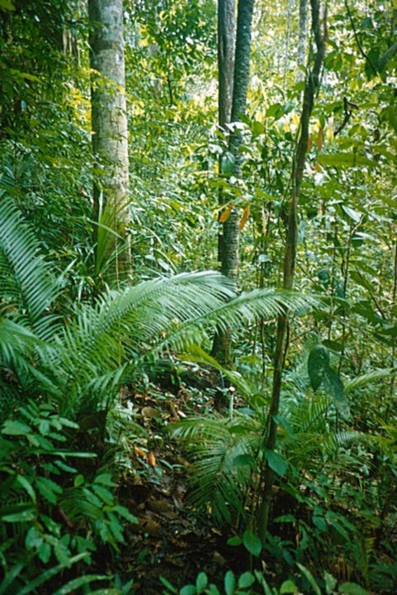 Dipterocarp Forest is an example of a natural ecosystem.