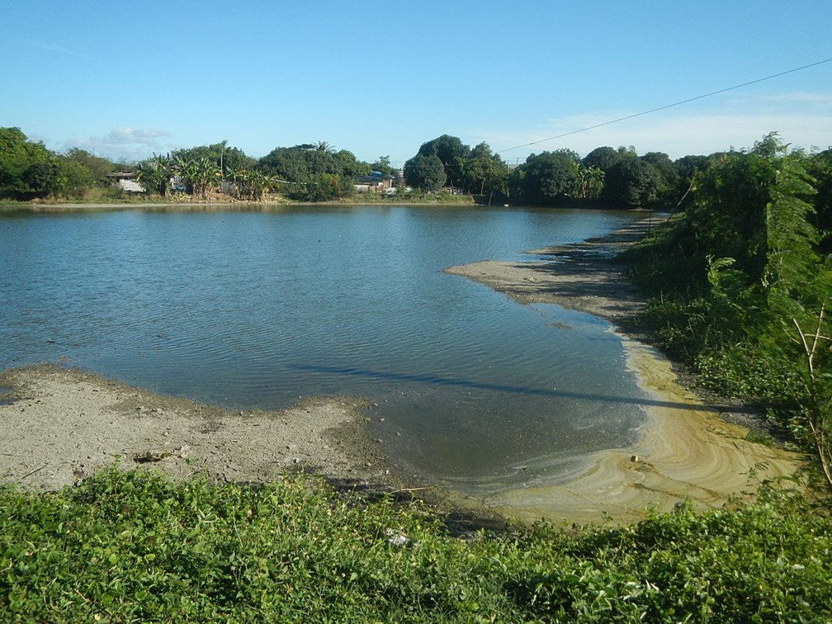 Fish pond is an example of a man-made ecosystem.