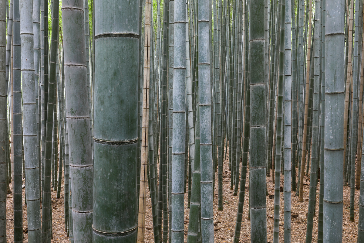 Bamboo Forest is an example of a natural ecosystem.