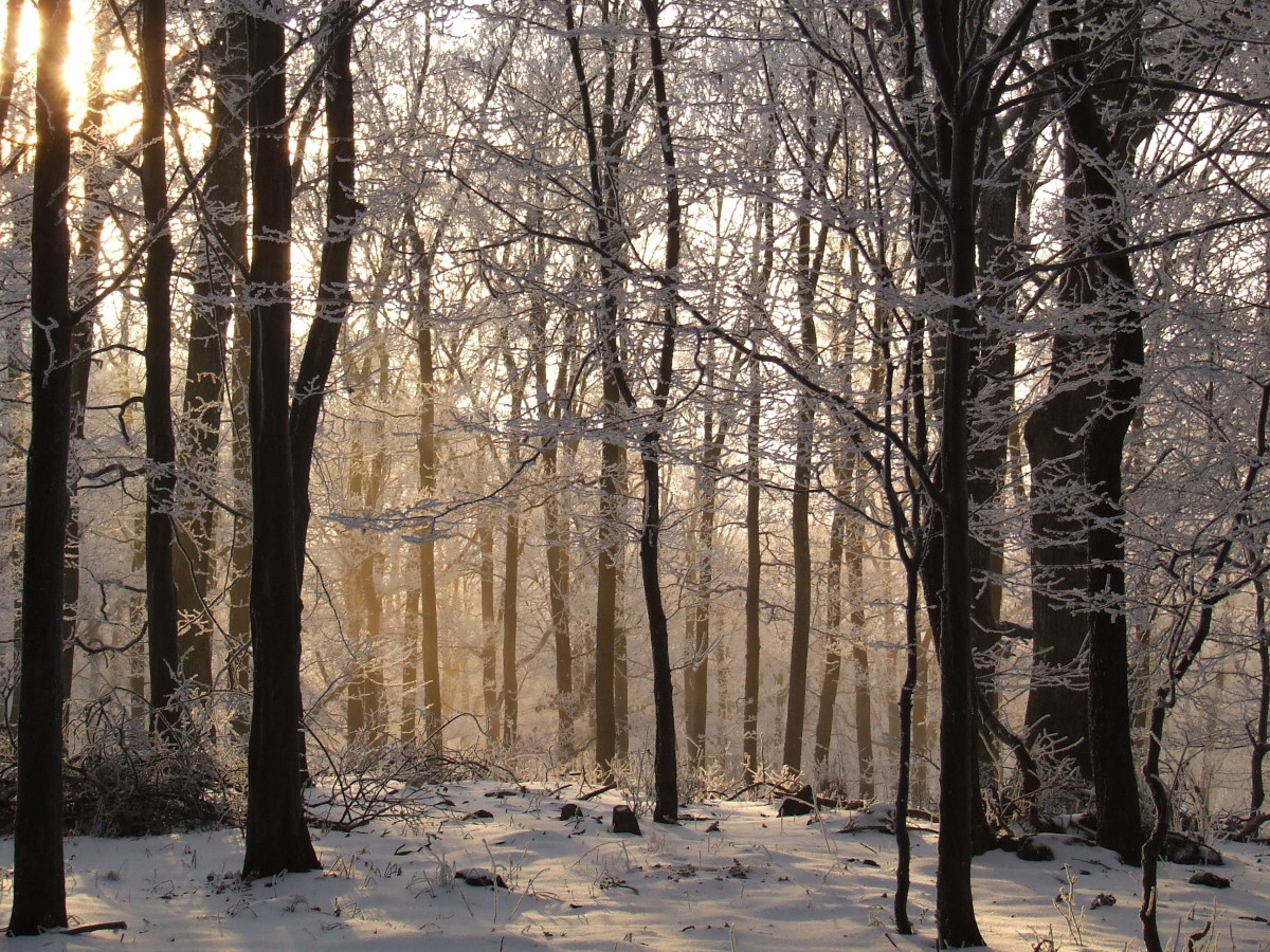 Beech Forest is an example of a natural ecosystem.