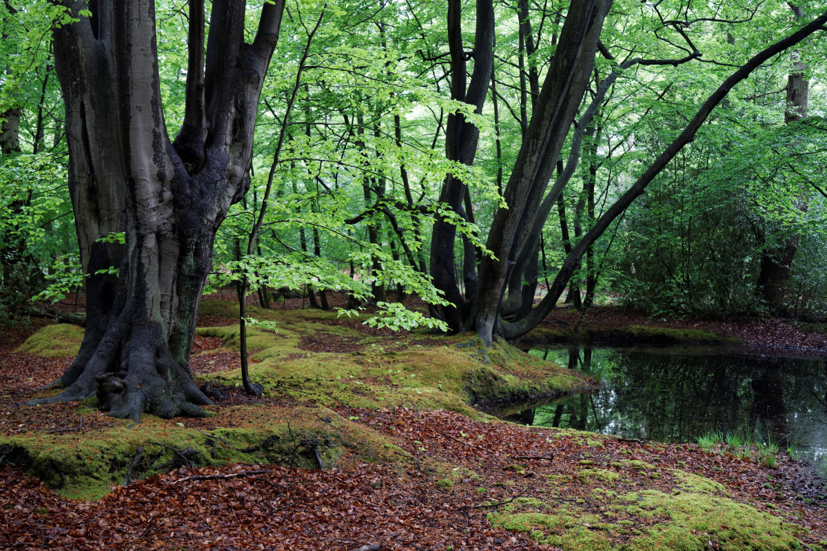 Epping Forest is an example of a natural ecosystem.