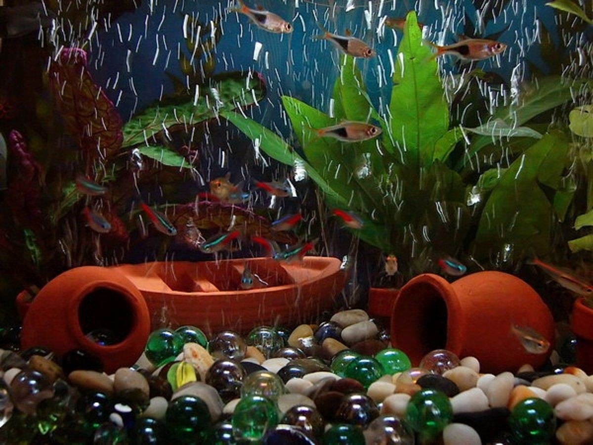 Aquarium is an example of a microecosystem.