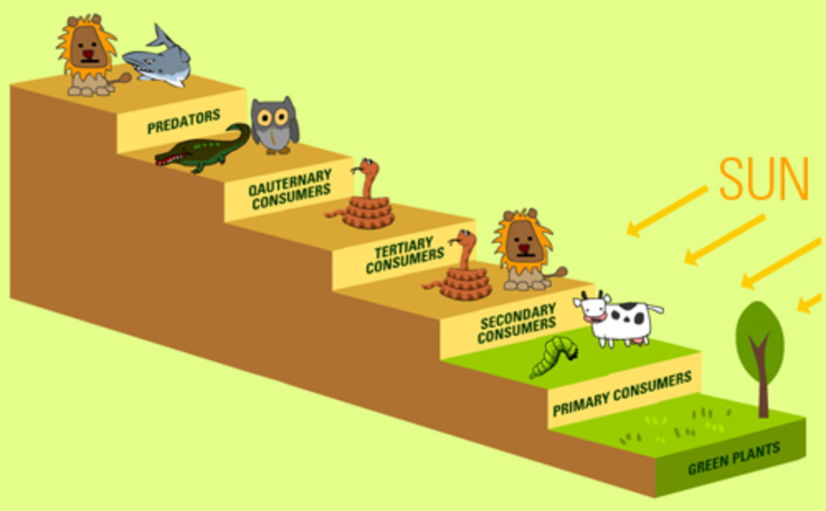 Food chain in an ecosystem