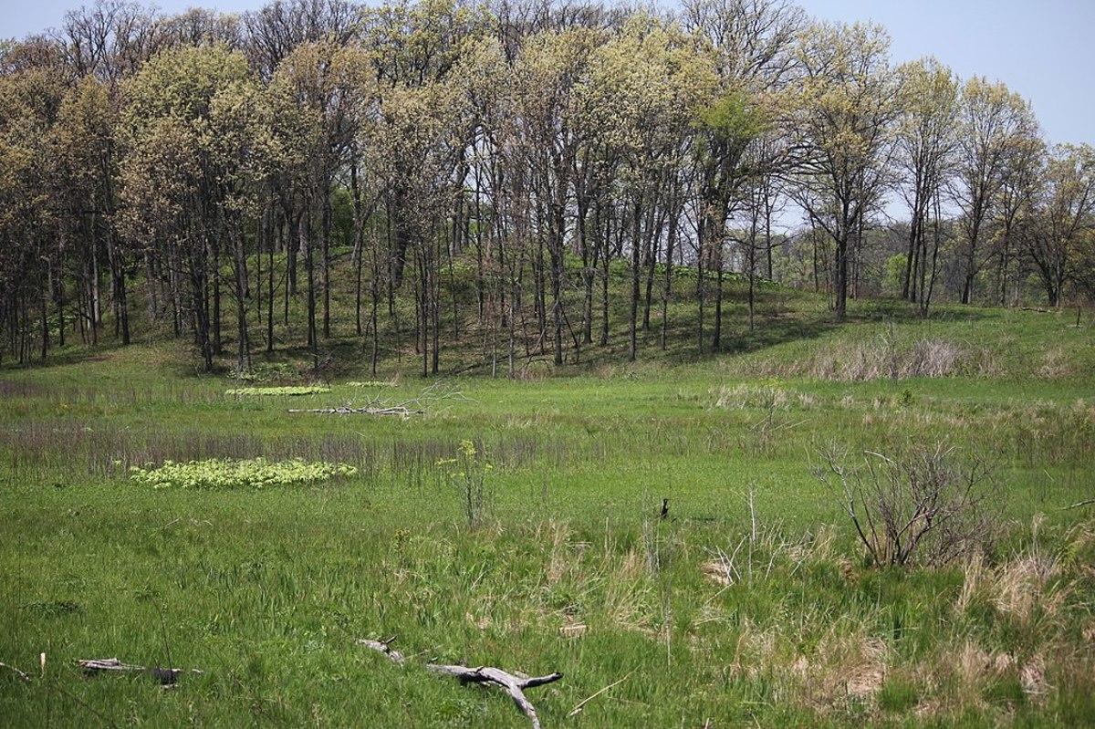 Nachusa Grasslands is an example of a natural ecosystem.