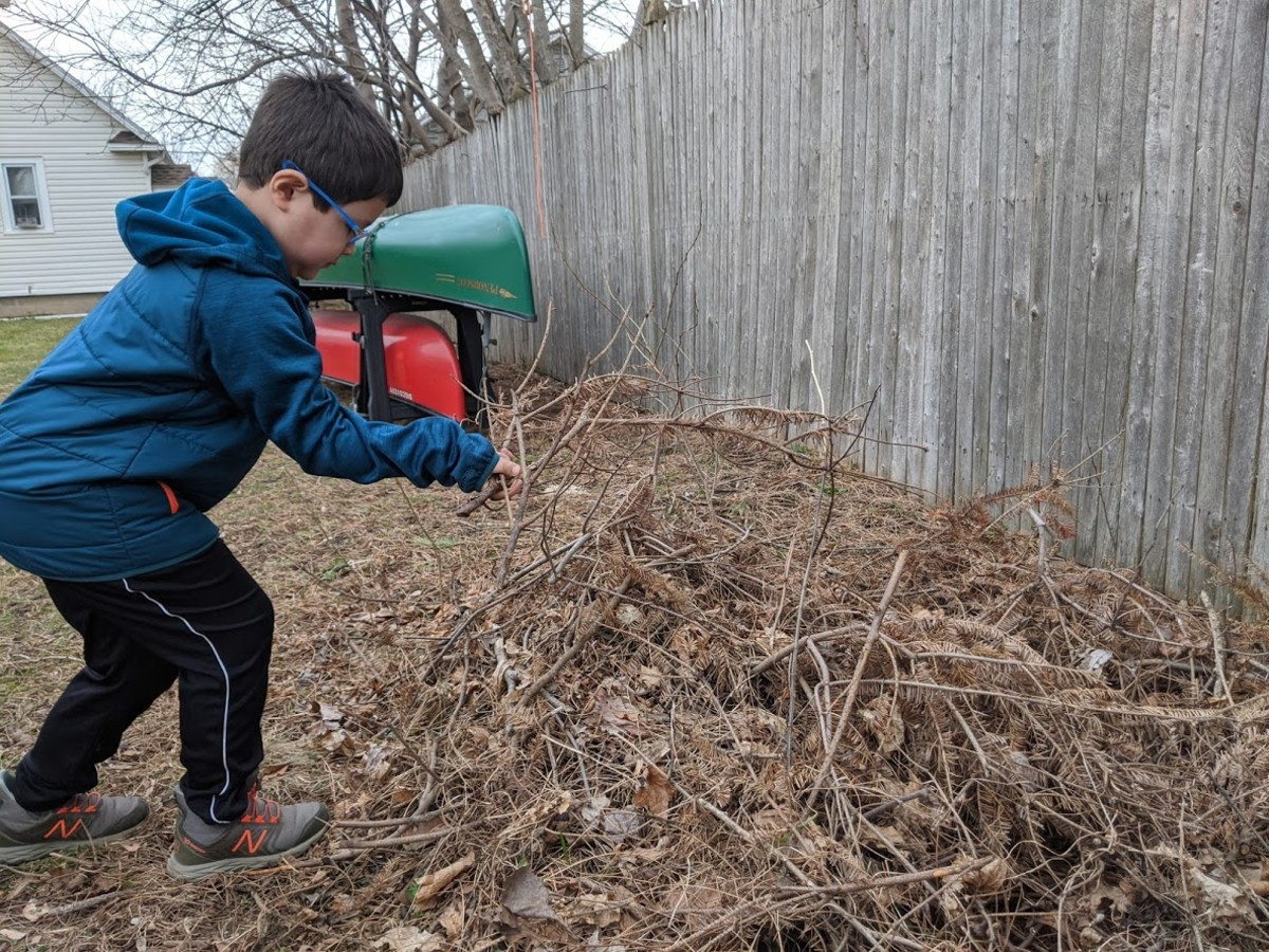 Build a brush pile to provide wildlife habitat in your backyard.