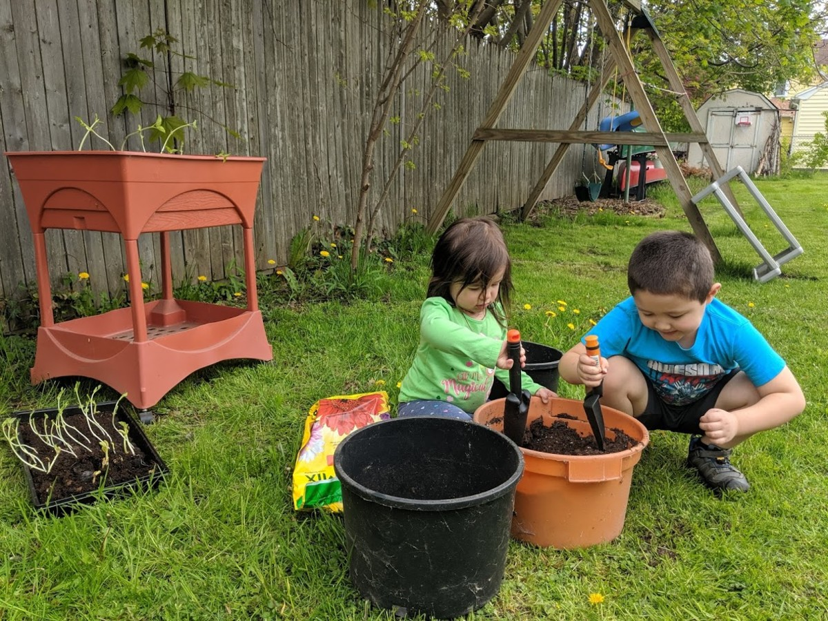 Kids can learn how their food is grown and provide food for wildlife and pollinators.