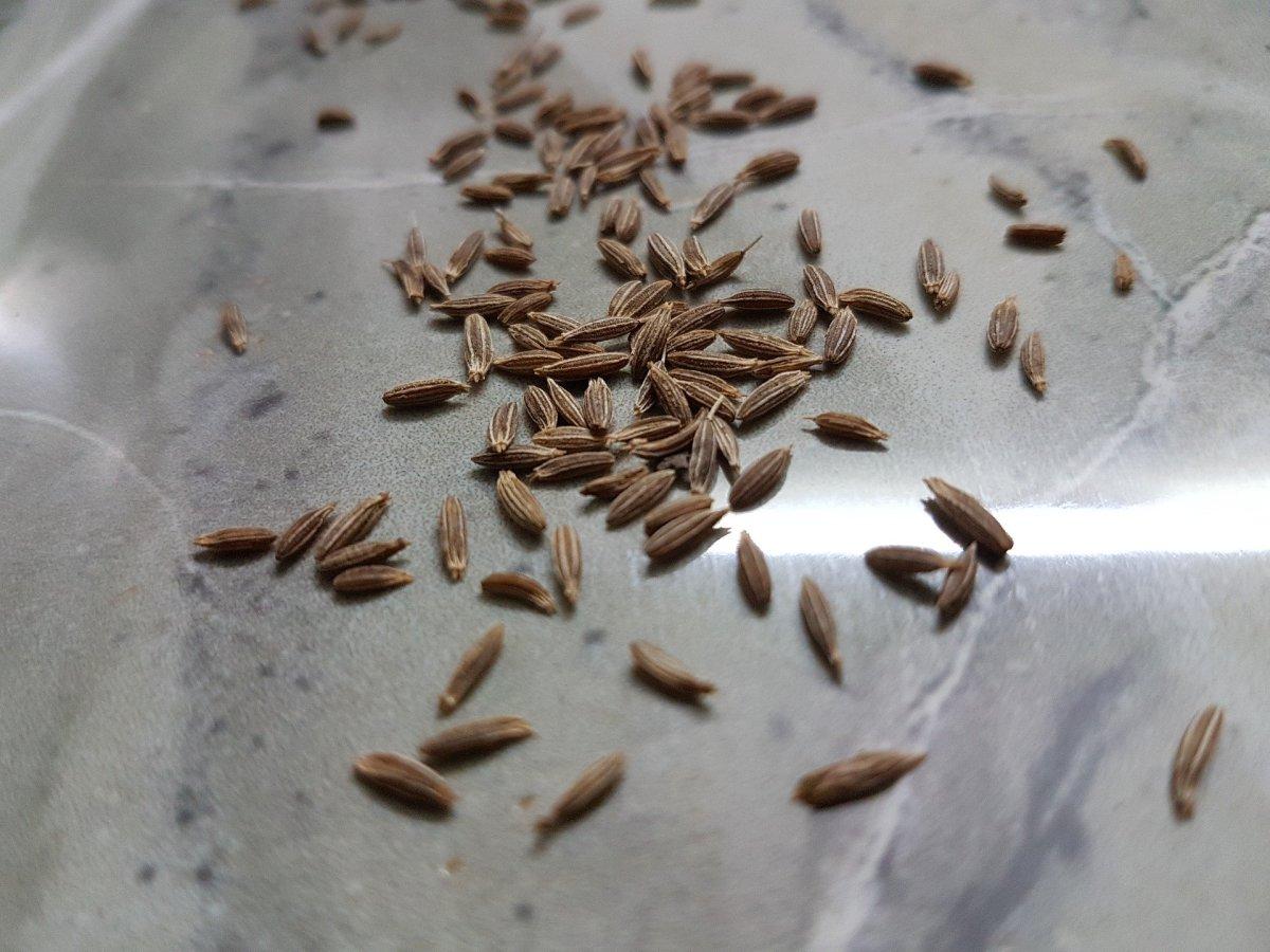 Cumin Seeds|Jeera Beej