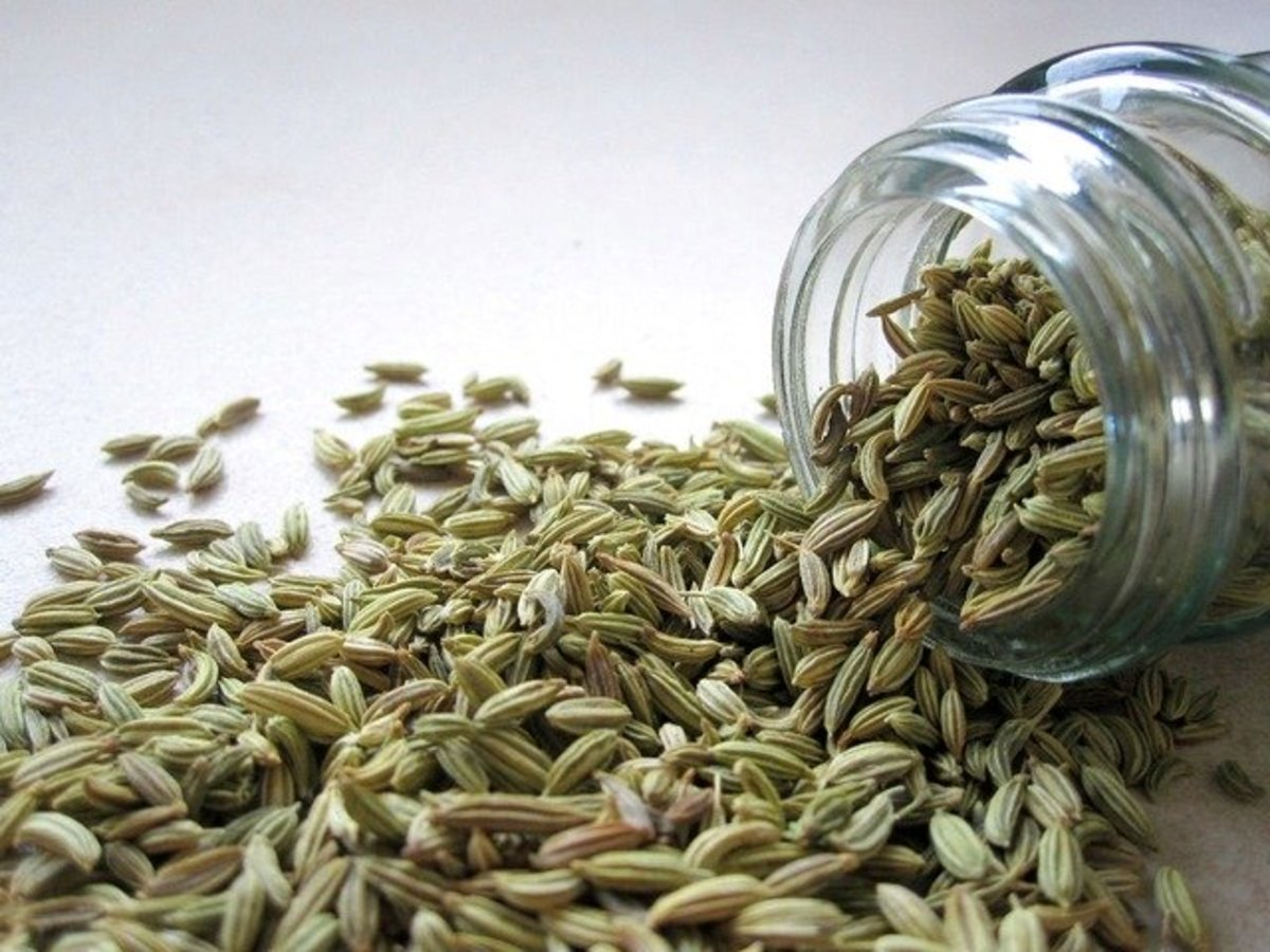 Fennel Seeds| Sonf Beej