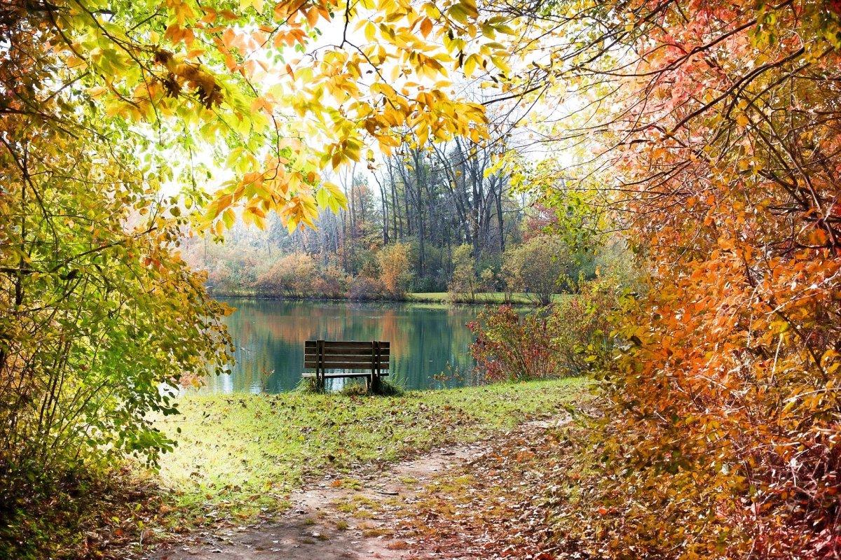 Pond|Talaa|ਤਲਾਅ