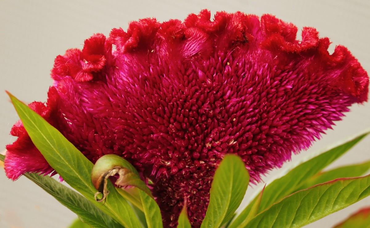 flower-names-in-punjabi
