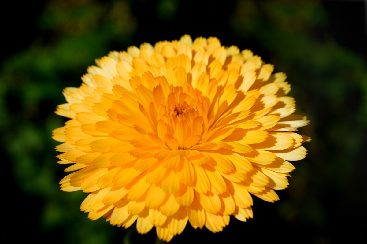 different-flower-names-in-spanish-for-english-readers