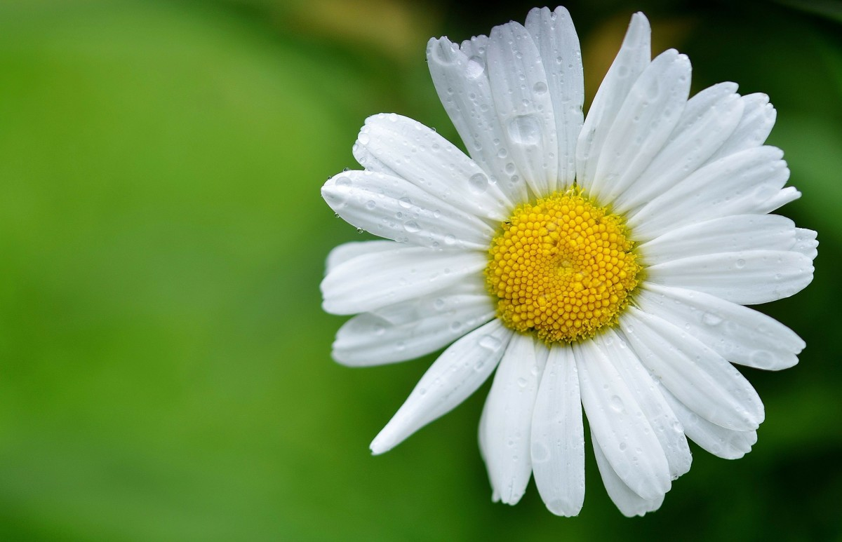 15 Flower Names in Polish for English Readers