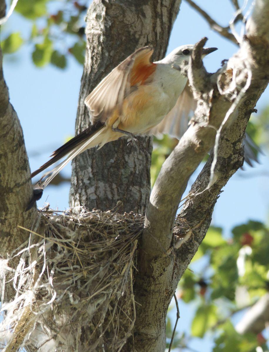 Flying from Nest