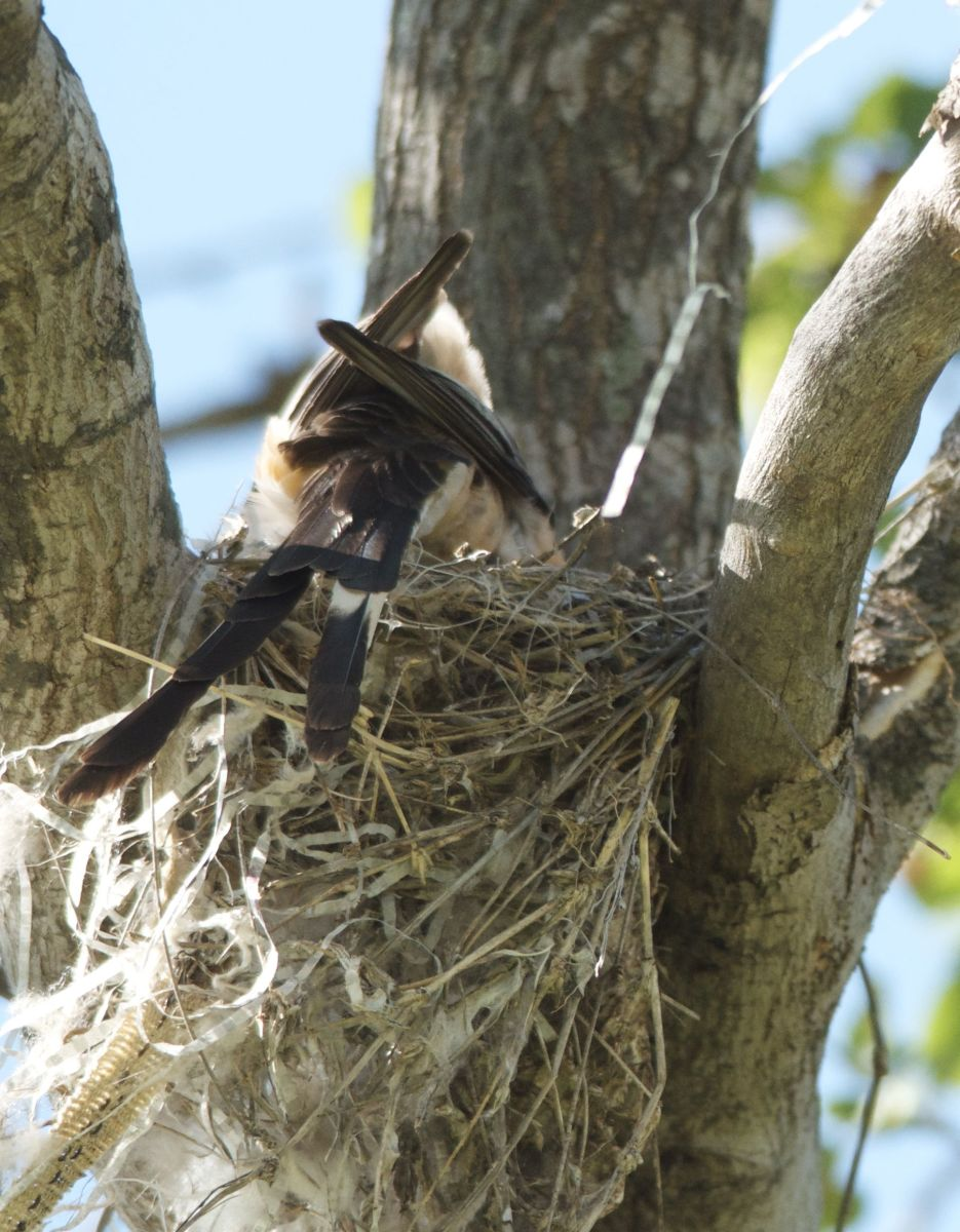 Backing Out of Nest