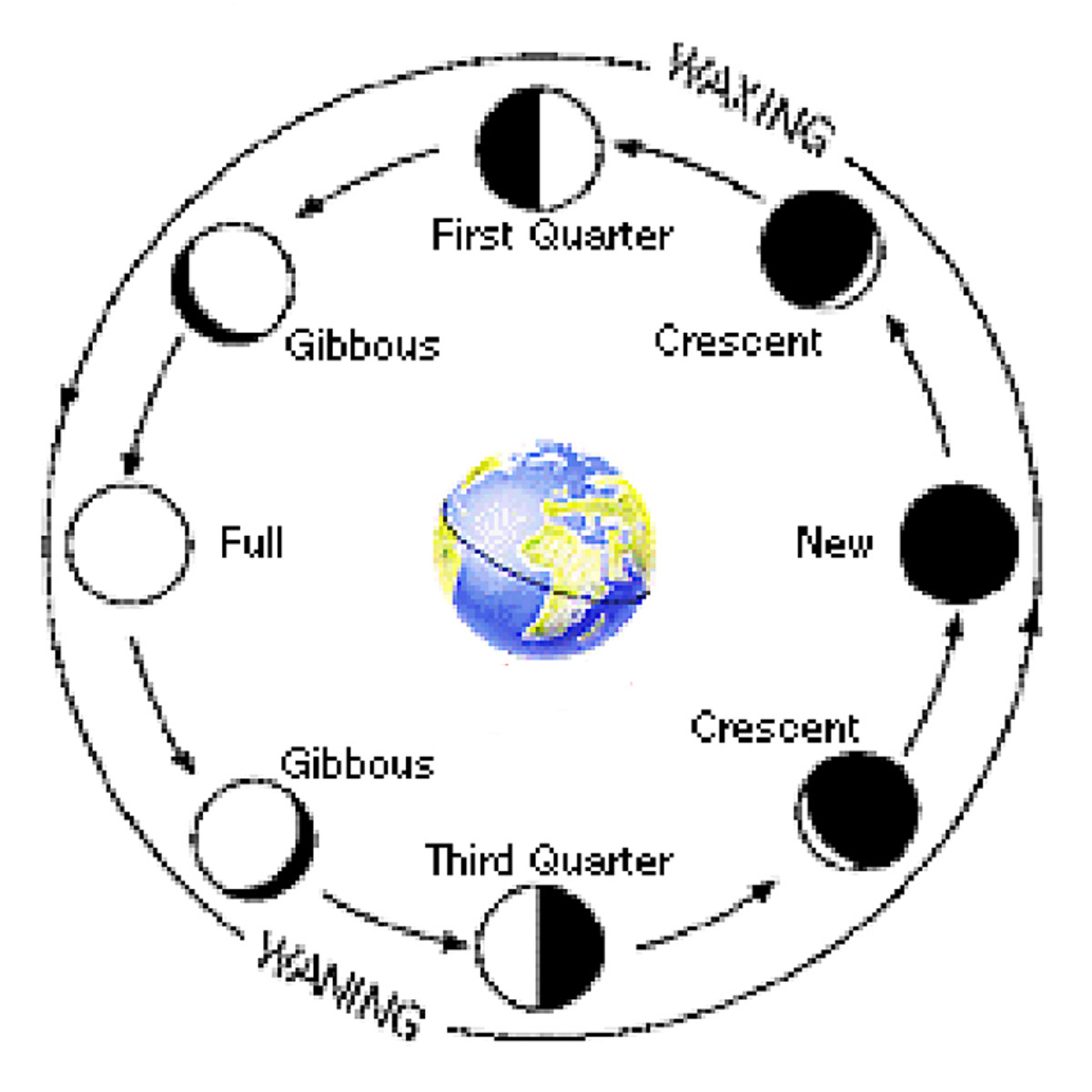 This diagram shows the phases of the Moon as it rotates counter-clockwise around the Earth, beginning with the New Moon when the Moon is between the Sun and Earth