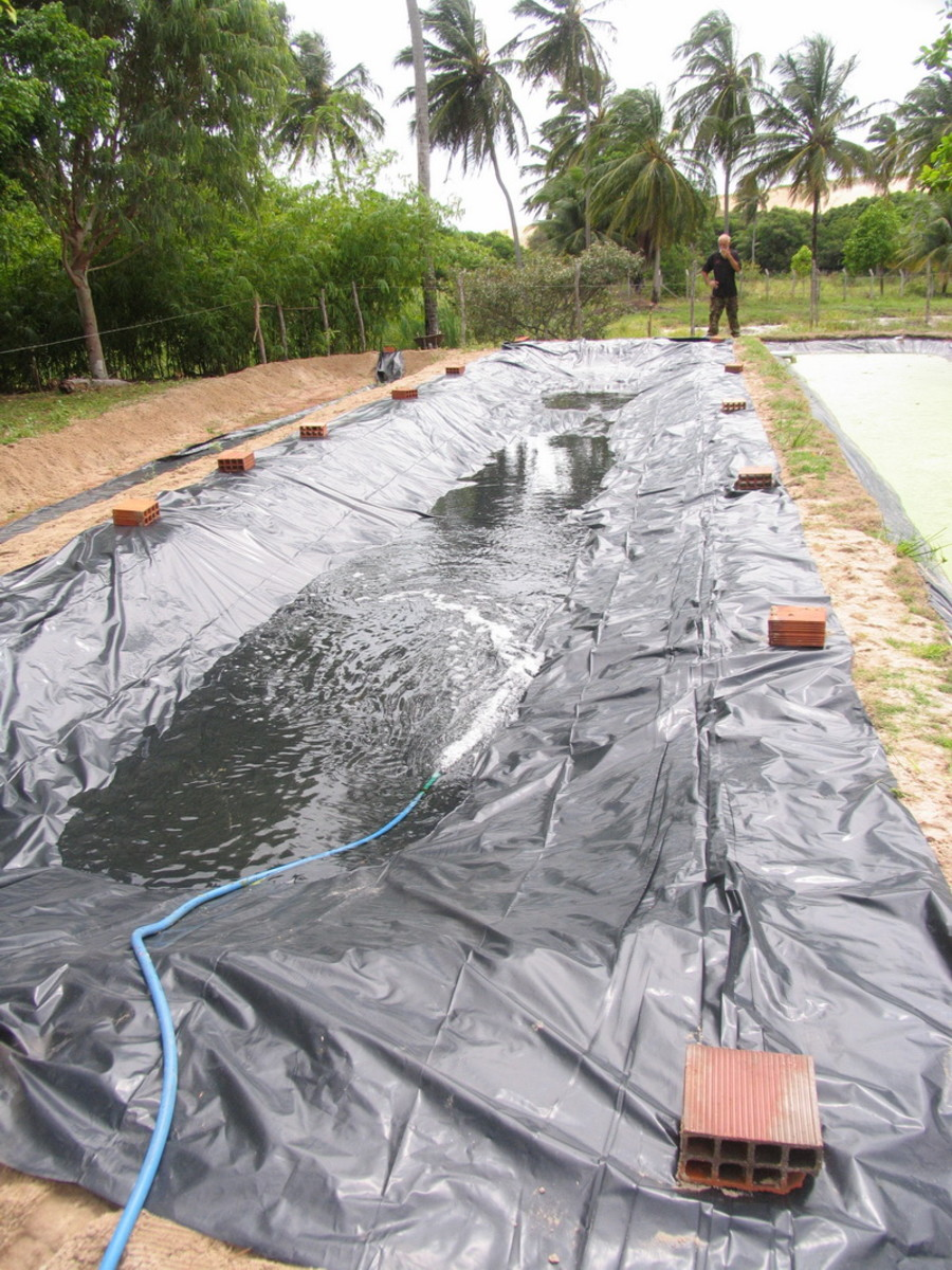 Constructing our duckweed ponds