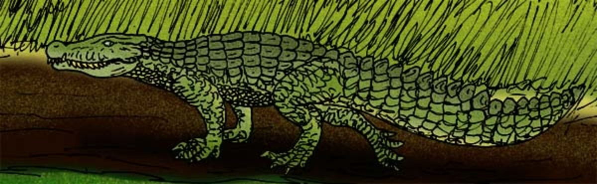 A depiction of the land crocodile known as quinkana