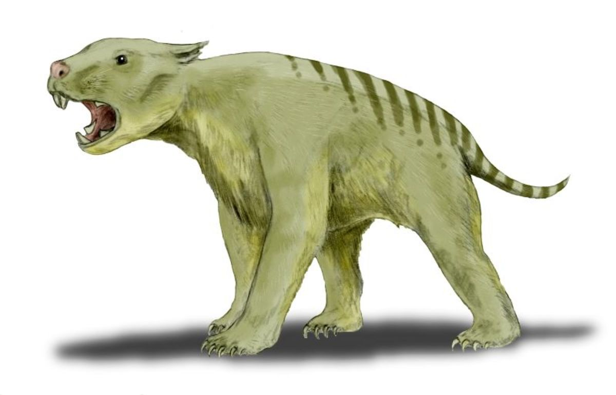 A depiction of how the marsupial lion may have looked.