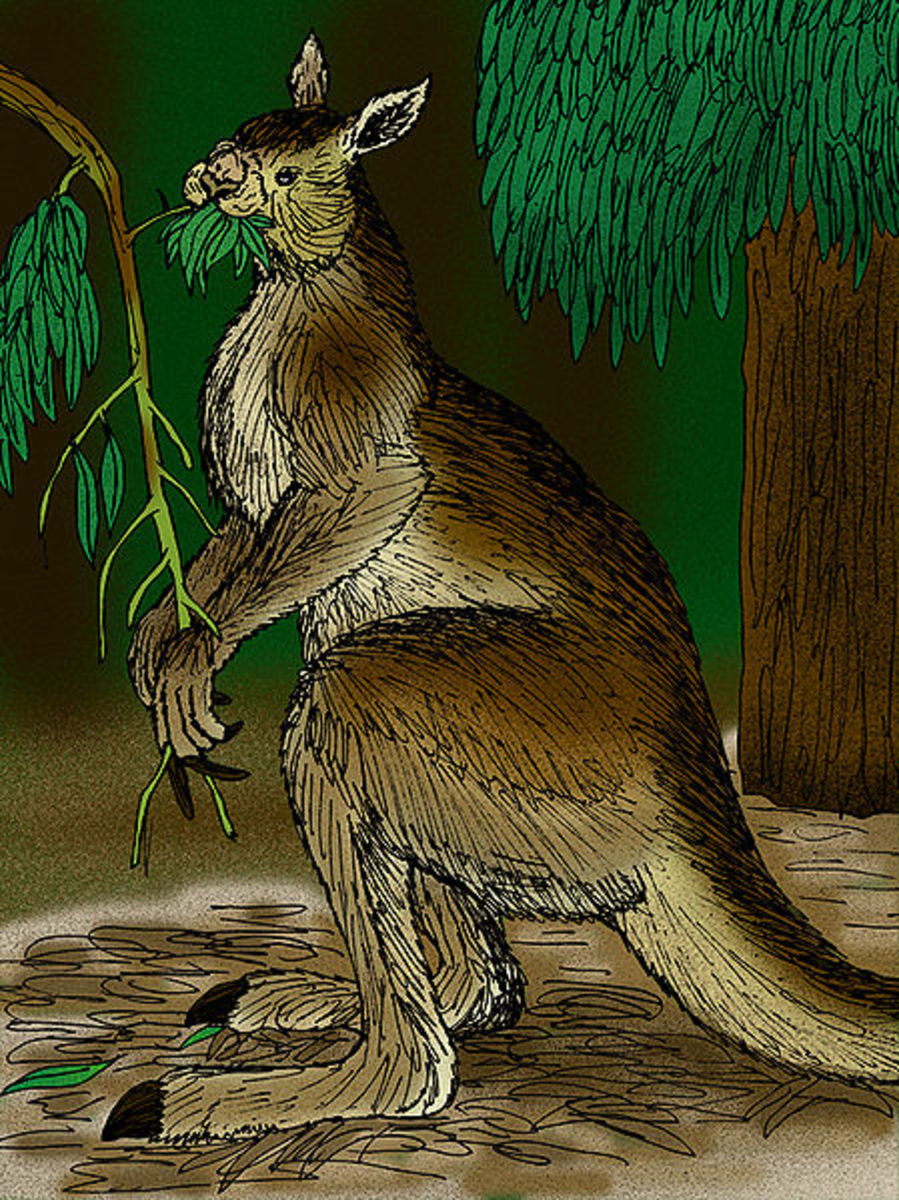 A depiction of the giant short faced kangaroo.