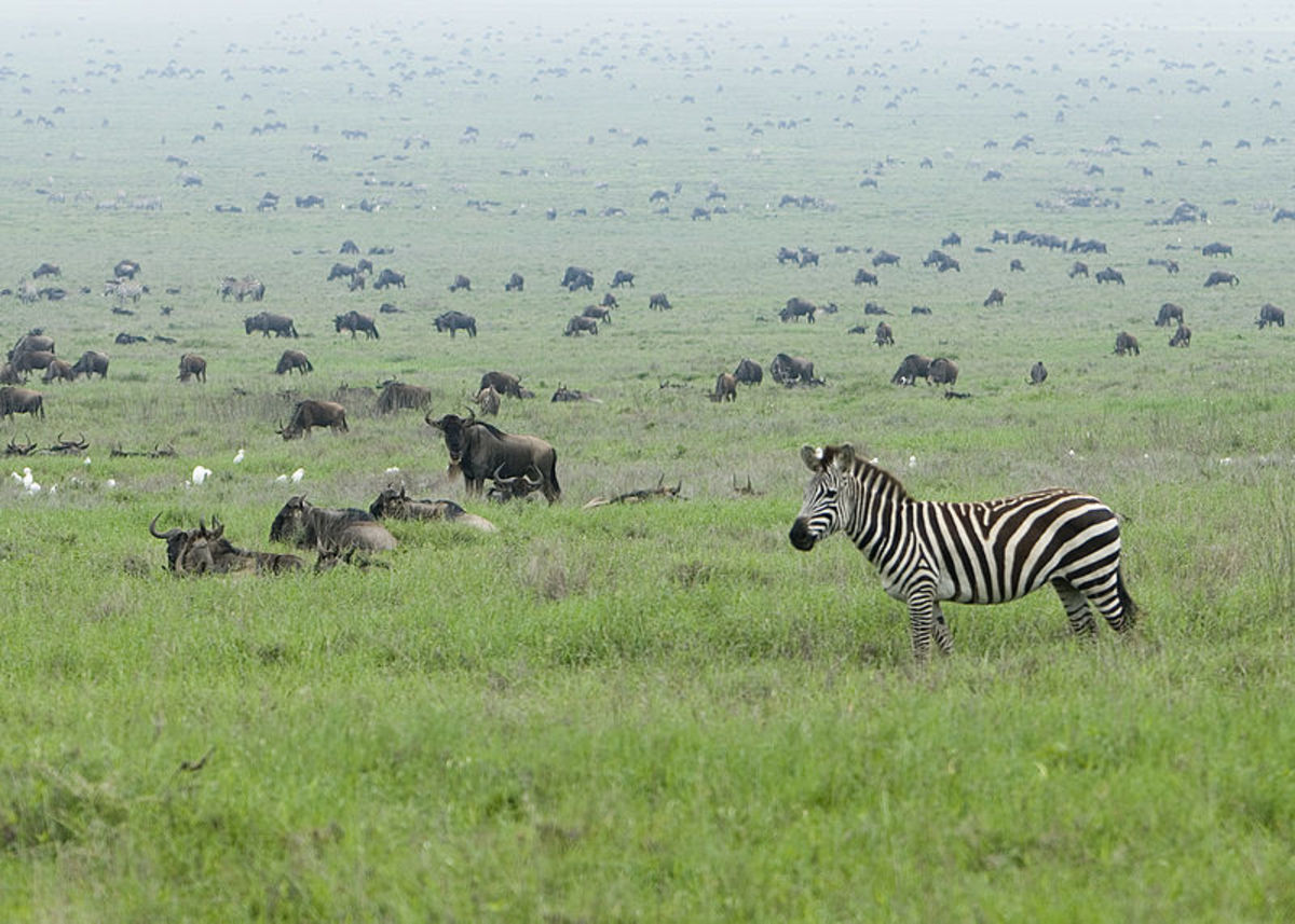 Africa is the only place that is still teeming with a diverse mixture of megafauna today.