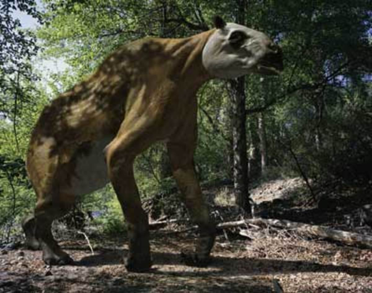 Ancylotherium was a bizarre looking prehistoric relative of the horse that lived alongside our ancestors in Africa.