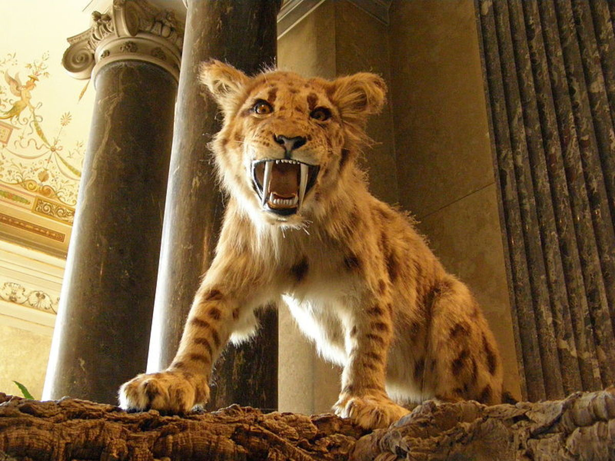 Megantereon was Africa's largest big cat and the ancestor of the legendary Smilodon that later terrorised the Americas.