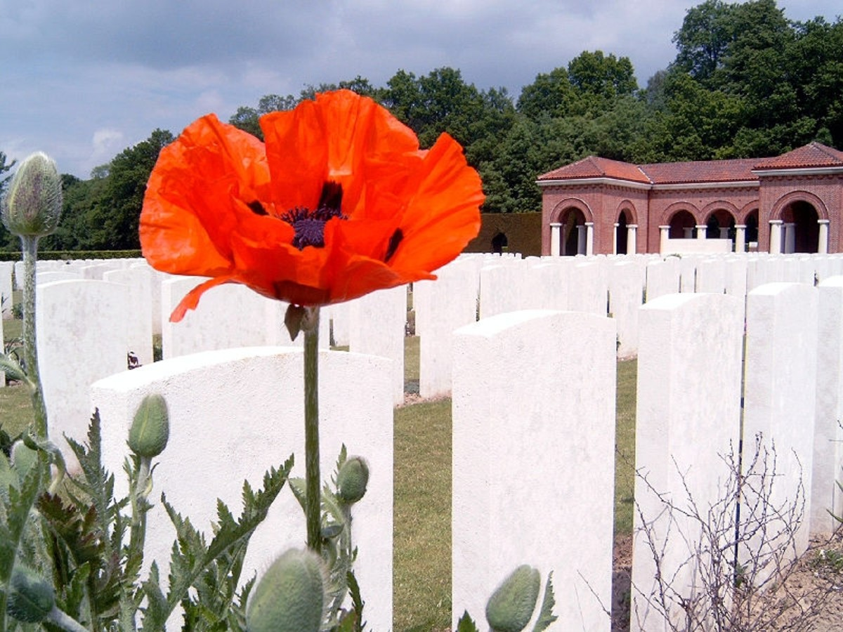 WWI: A red poppy in London Cemetery next to High Wood.
