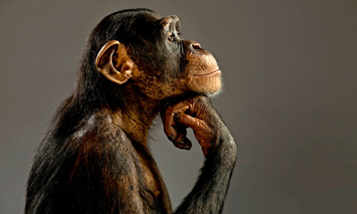 psychology-research-psychological-research-on-animals