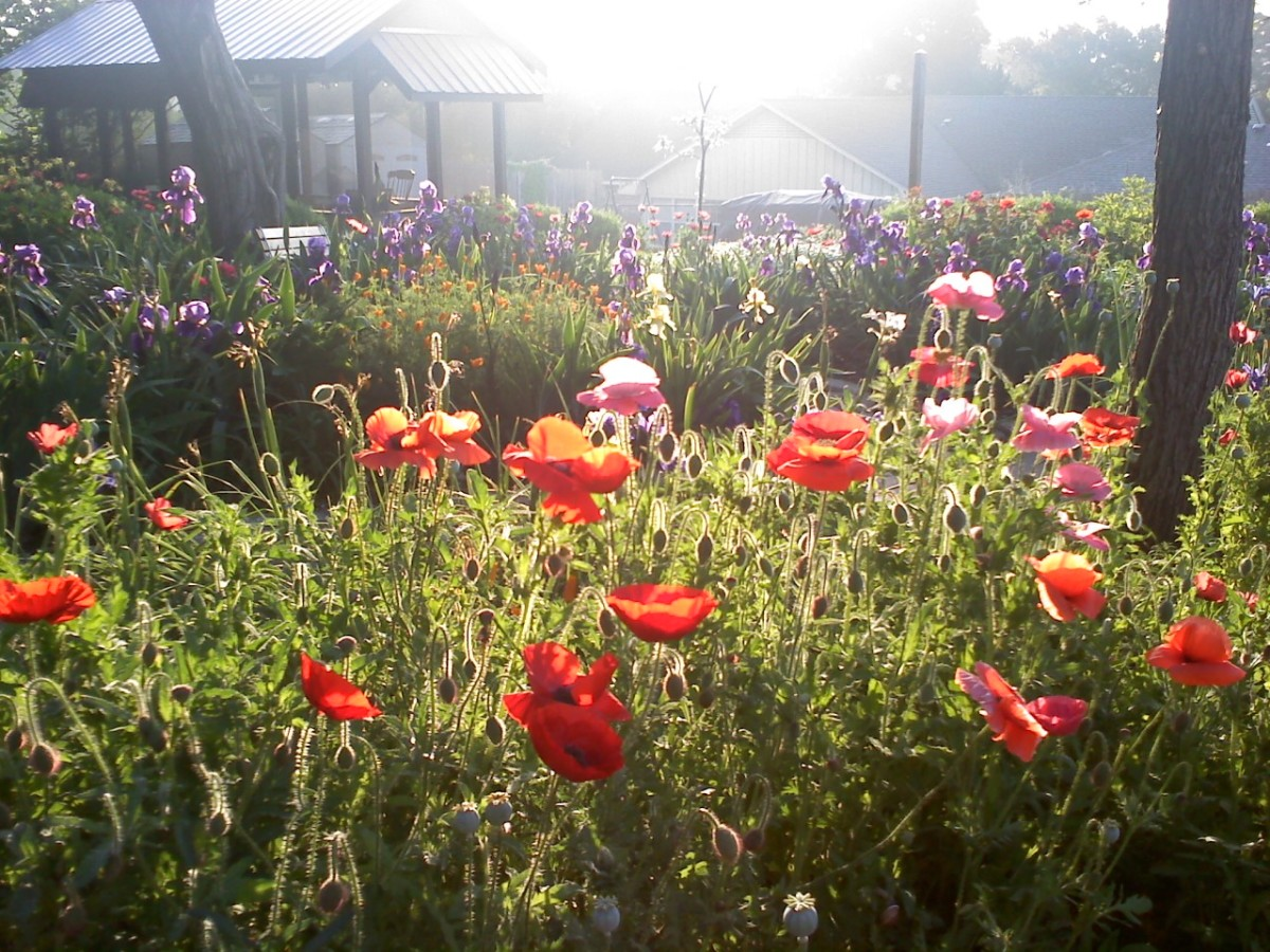Nature Memories: Write about spending time in your garden or out in a field of wildflowers.