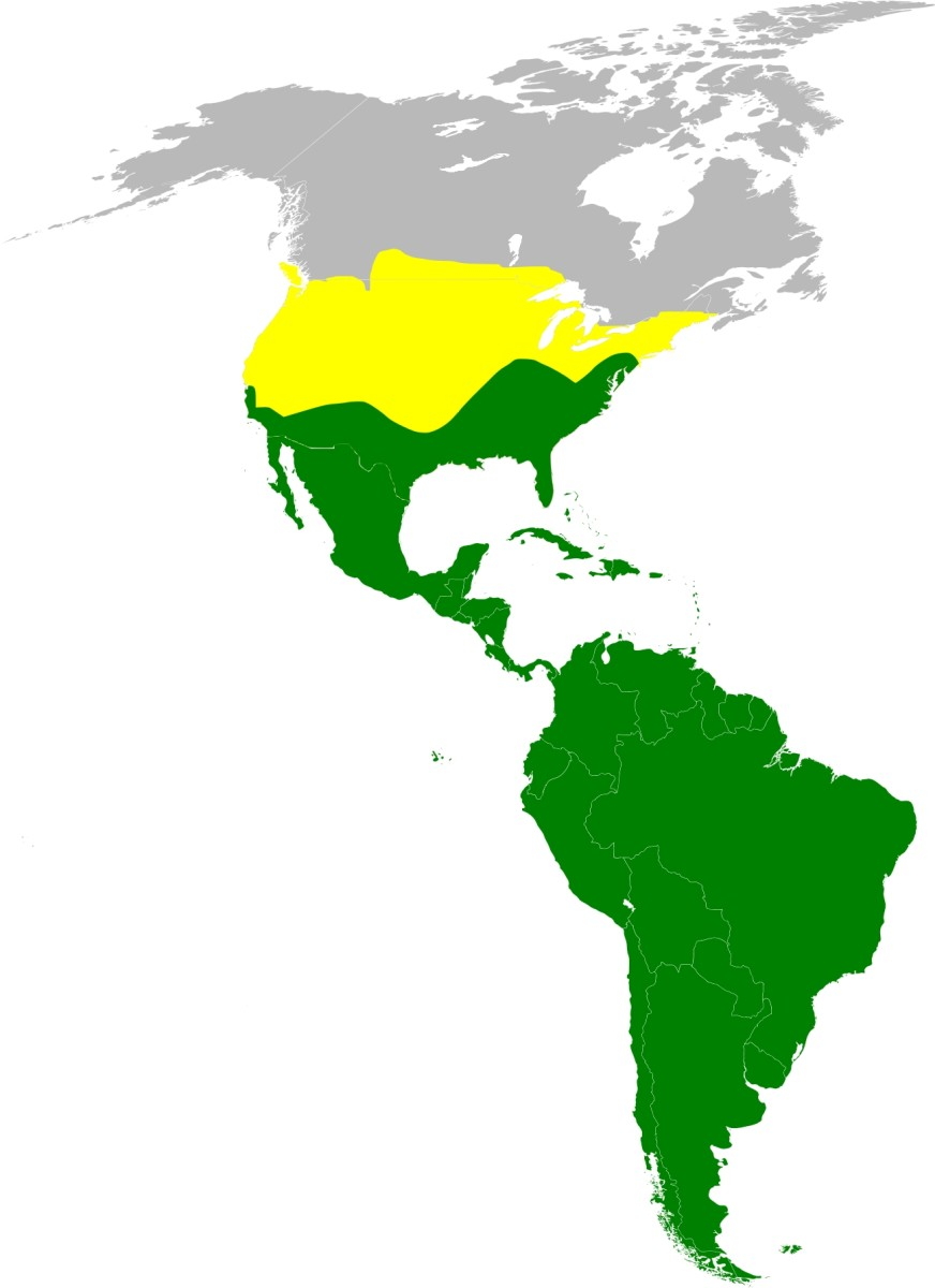 Turkey Vulture Range: Yellow denotes summer only; green denotes year-round