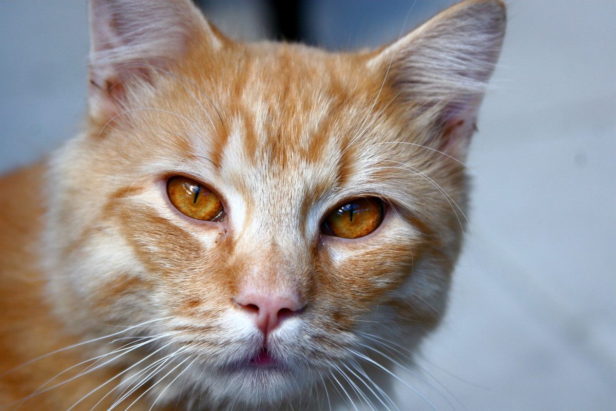 Amber eyes are more common in animals than in humans.