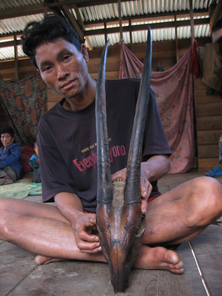 Villager and saola horns, Bolikhamxay Province, Laos, 2002. © William Robichaud