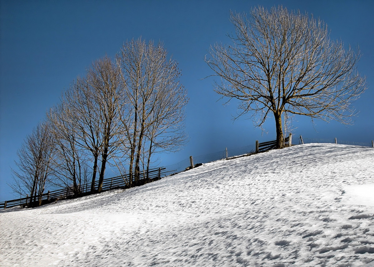 about trees in winter
