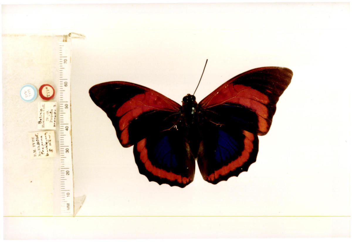 top-10-rare-or-endangered-butterflies