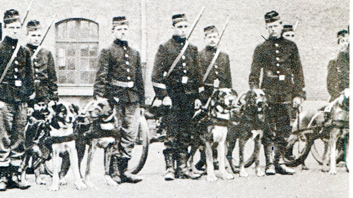 Belgians used dogs to drag their guns.
