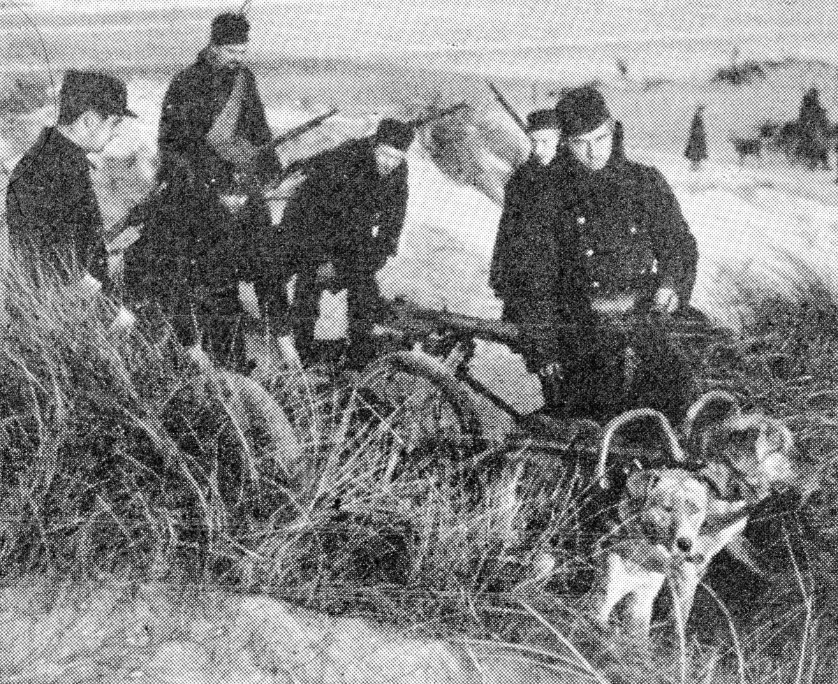 Belgian soldiers placing a Maxim gun-carriage drawn some by dogs under some long grass on the sand-dunes.