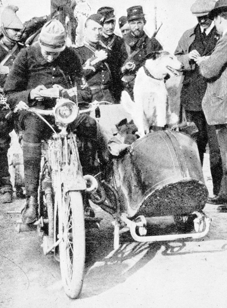 """The French war-dog """"Prusco"""", was employed in carrying messages from a motor-cycle scout to headquarters. This dog and his companions penetrated the enemy's lines on many occasions."""