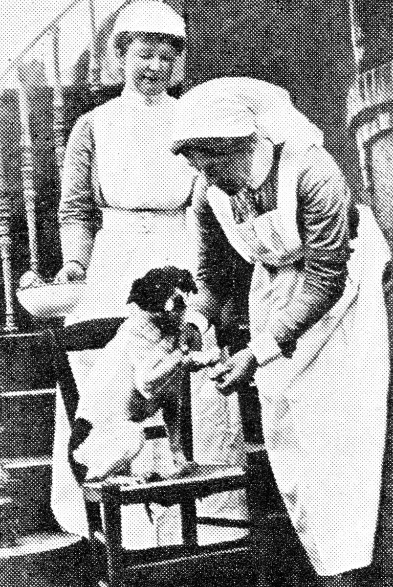 Nurses attending the wounds of their mascot, a present from an officer-patient.