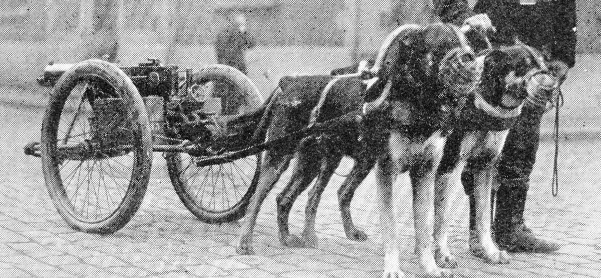 Belgian dog-drawn machine-gun waiting tor its regiment. The mortality among these dogs was extremely high.