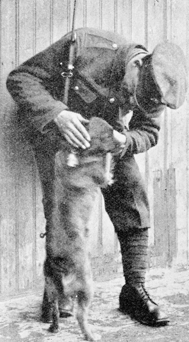 This dog followed some British soldiers for five miles while they were marching in France, so they adopted him.