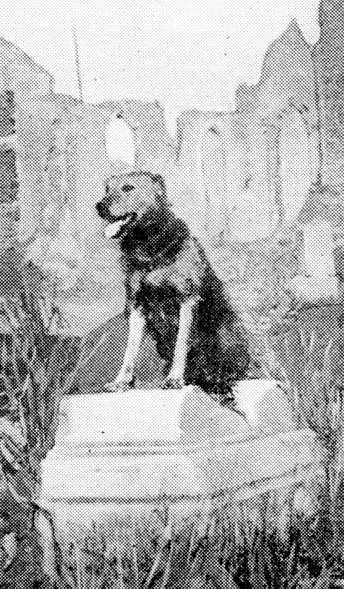 An Airedale on duty in a church destroyed by the Germans.