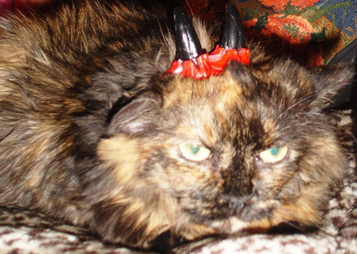 Smile, Fancy, you've earned your horns!  My cat, Fancy, was always unpredictable.  Just when you thought she enjoyed a nice head scratch, she'd pop you good with her claws extended.  There was never a warning. We sure loved the old gal.