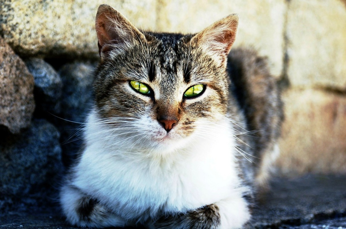 According to research, cats recognize their owners' voice but opt to ignore it.  Cat lovers appreciate their independence.